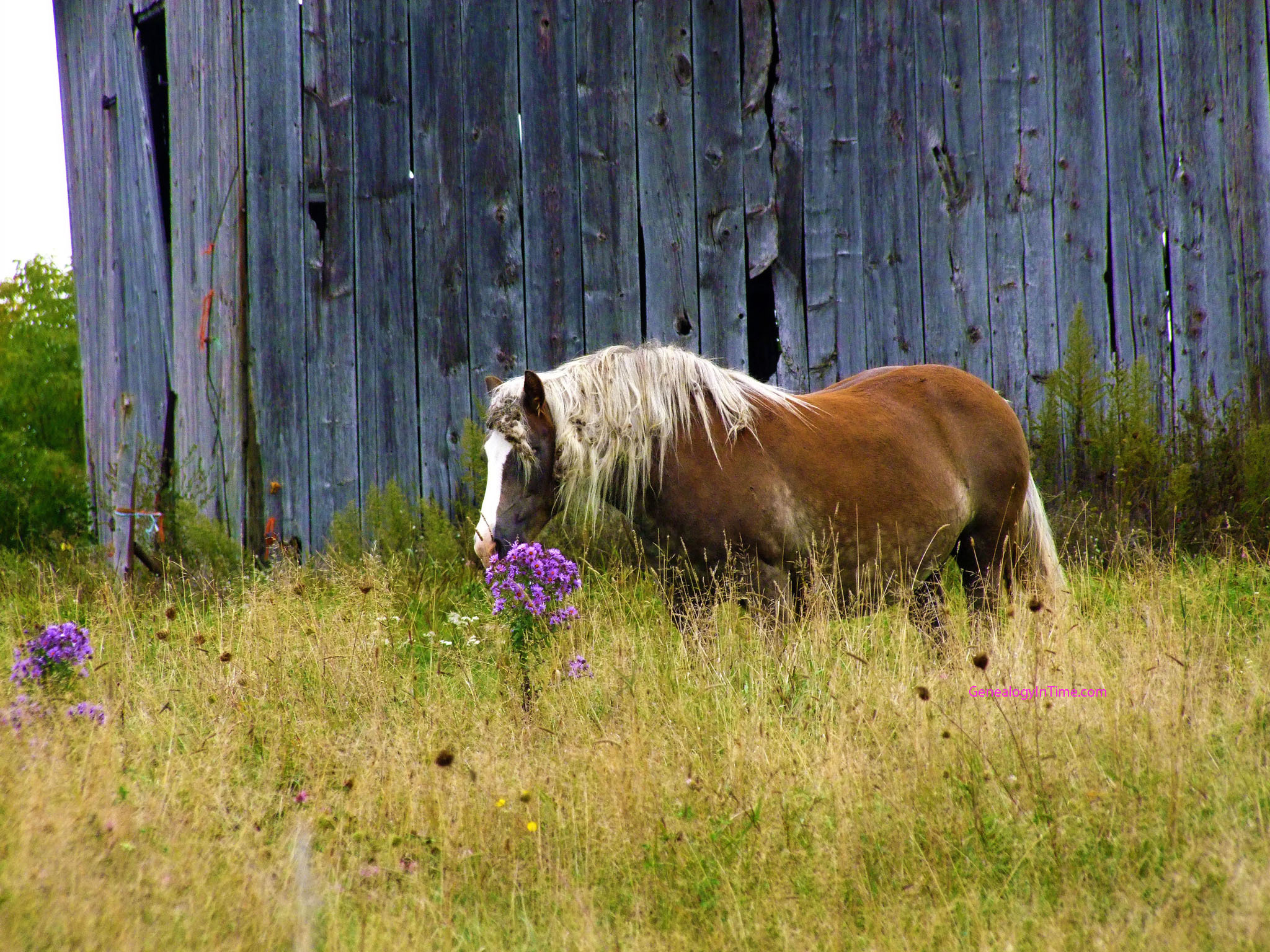 horses and flowers wallpaper - photo #14